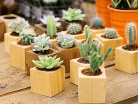5 Types of Plants that one should Never Keep at Home According to Vastu Shastra.