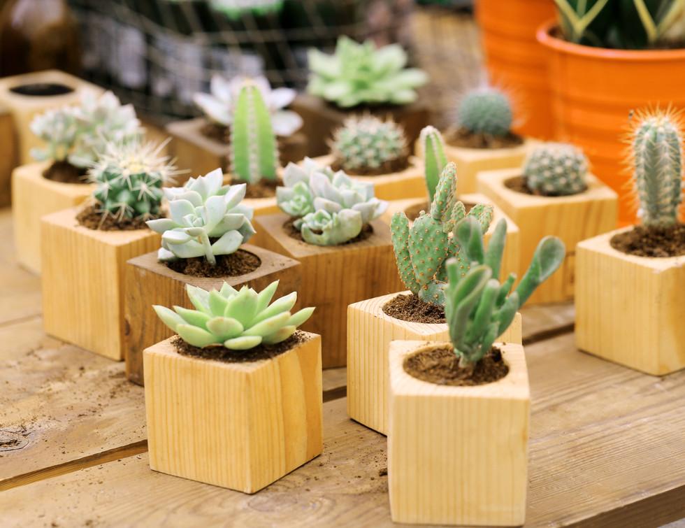 SundayHouse-Cactus-Collection