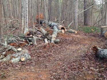 Volunteers Perform Trail Maintenance