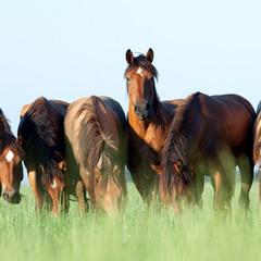 Herd-Horses.jpg