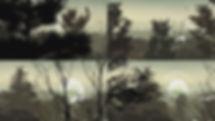 deep forest.jpg
