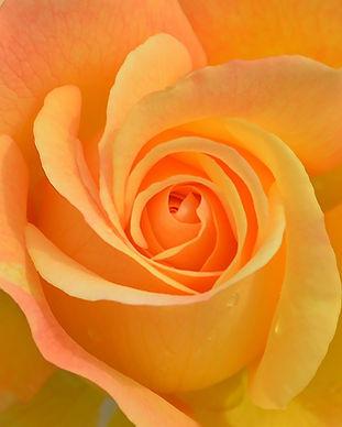 flower-3063414_1920.jpg