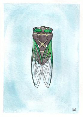 The Time Traveler / Cicada