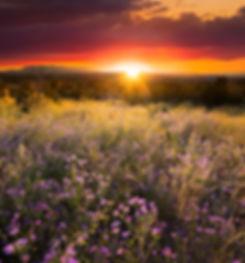 NM - Wildflowers.jpeg