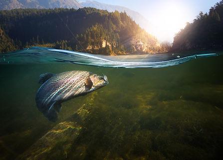 Lifestyle - Fishing 2.jpeg