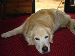 Buddy 2005