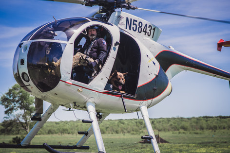 Police K9 Helicopter training