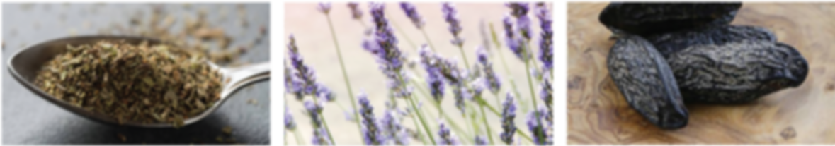 ESN French Lavender Fragrance Notes.png