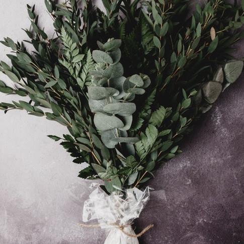 Eucalyptus_edited.jpg