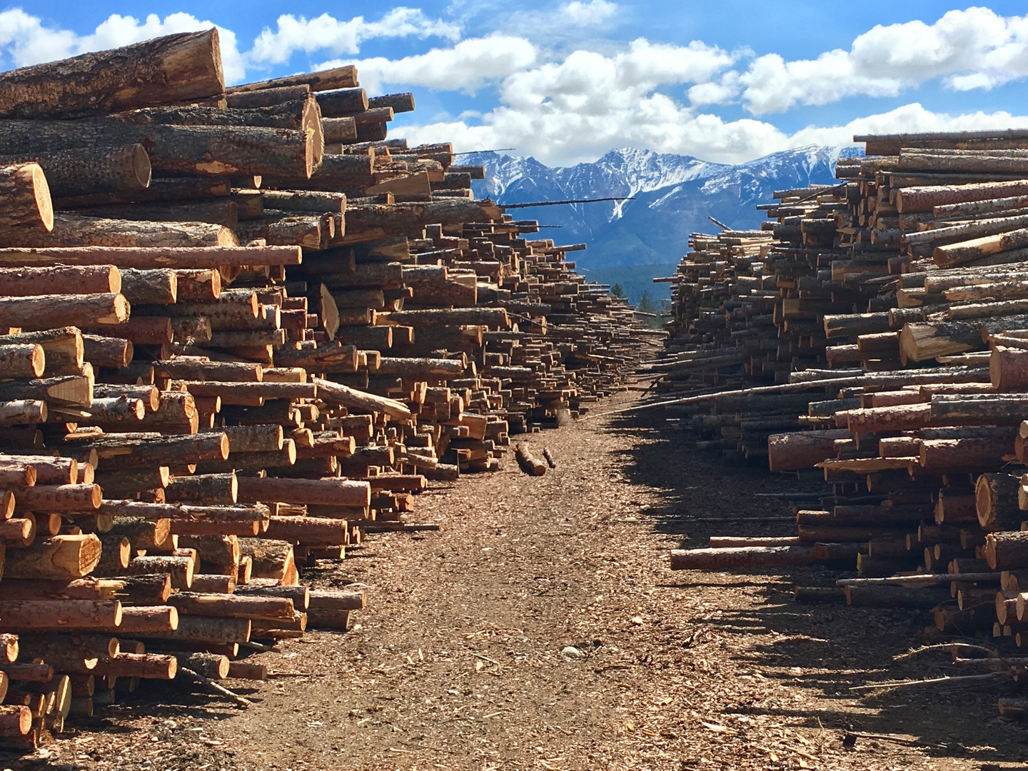 Two log piles.jpg