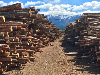 Two log piles.jpg