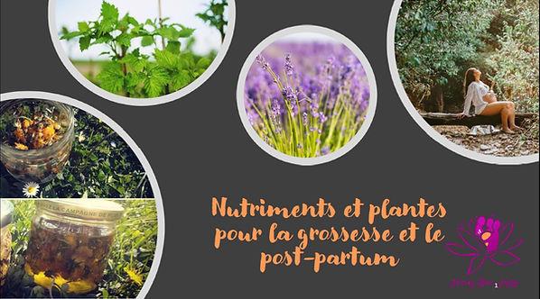 nutriments et plantes .jpg