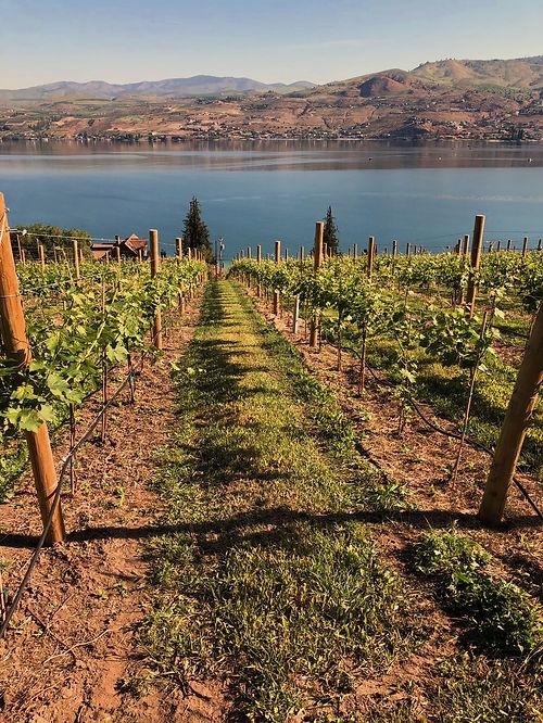 vineyard_shot.jpg