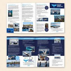 Brochure - 8 page roll rold