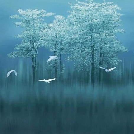 Au cœur du chaos, le Silence...