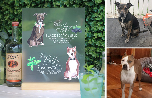 hilary clark dog comparison.jpg