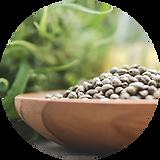 'hemp seeds.png