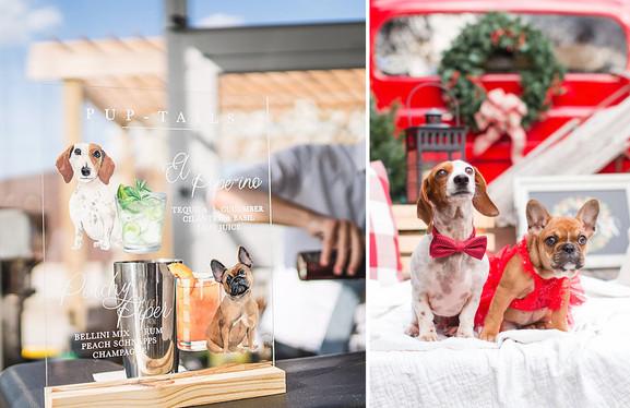 amanda novak dog bar comparison.jpg