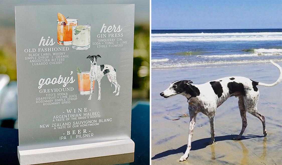 nato colombo dog comparison.jpg