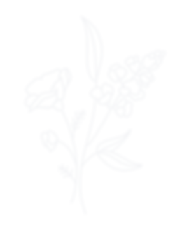 creative standard logo transparent.png