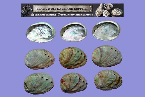 Red Abalone Shells
