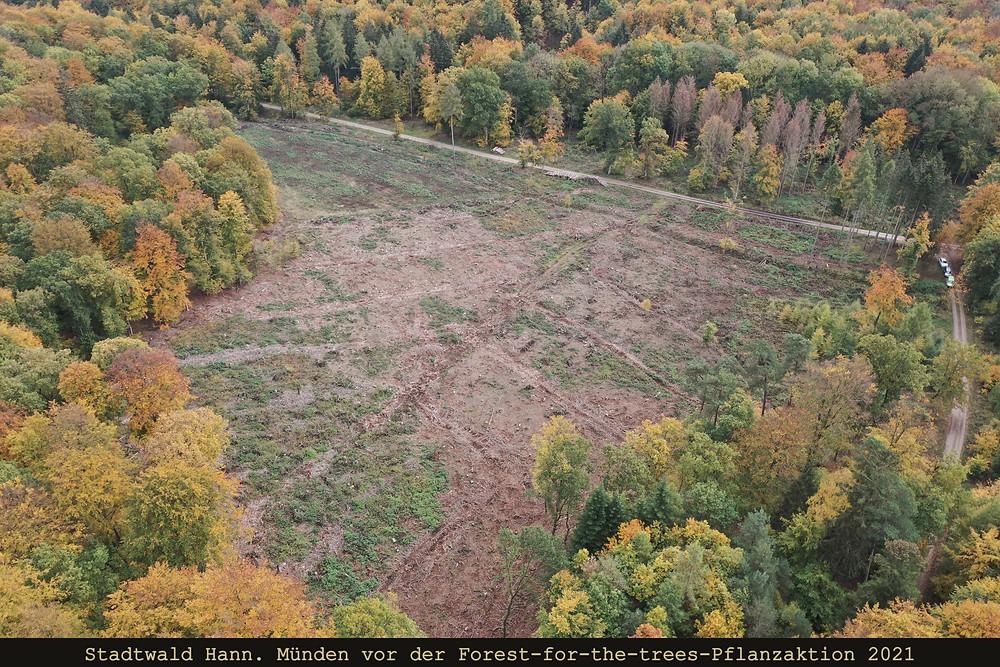 Forest for the trees, Hann. Münden, Stadtwald, Klimawandel, Kahlfläche, Wald
