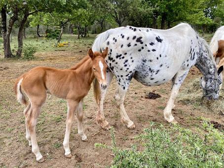 4e naissance ! Sur les 6 attendues