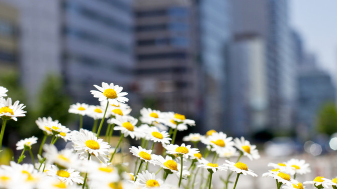 #springbreak