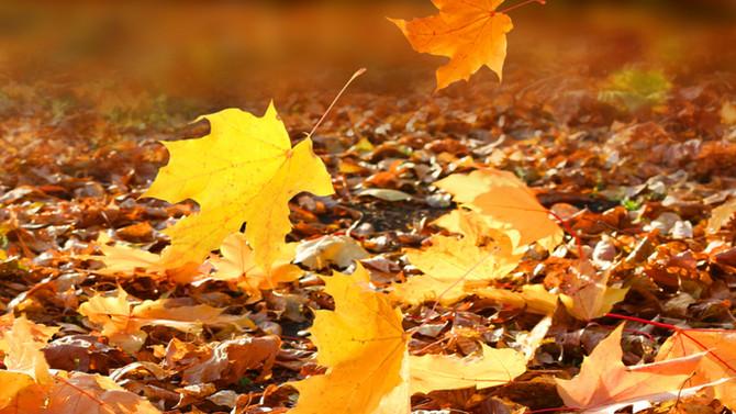 Si sta come d'autunno…