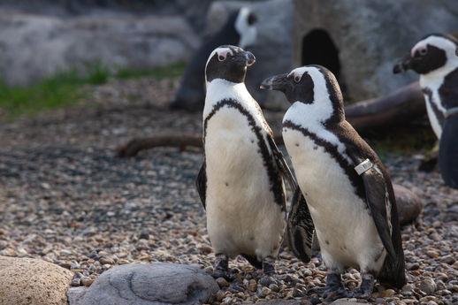 Bristol Zoo - JJ-Penguins-[07.10.20]-6.j