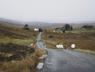 Druską ant kelio ragaujantys gyvūnai kelia pavojų vairuotojams
