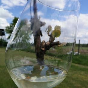 Auf den Spuren von Obst und Wein