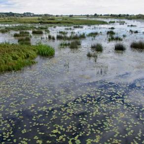 Lebendige Flussauen der Oder bedroht - Ein Beitrag zum Welttag der Feuchtgebiete