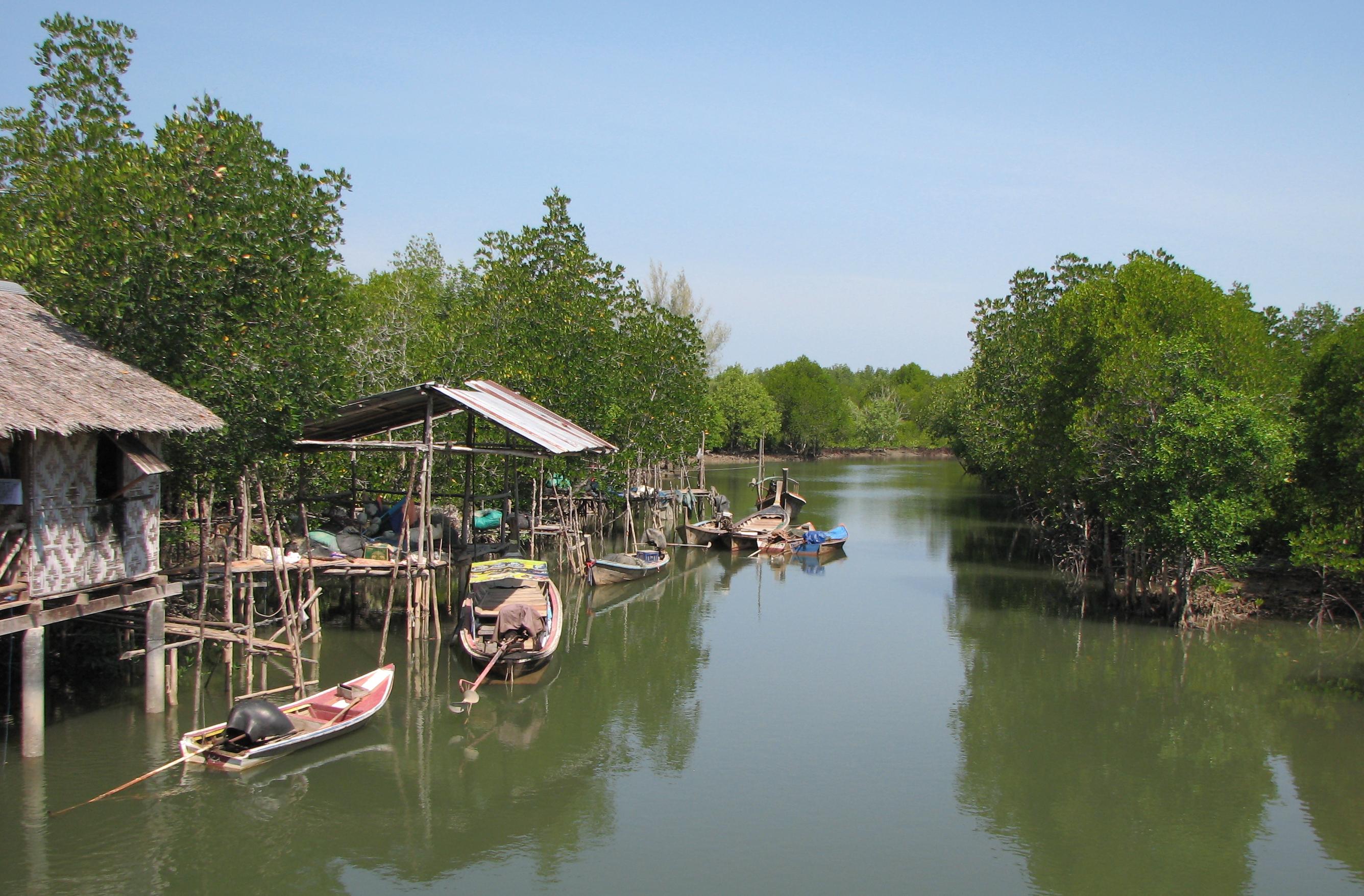 koh lanta mangrove