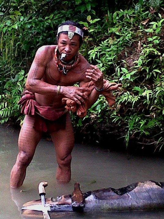 Mentawai Tribe  Looking for Sago