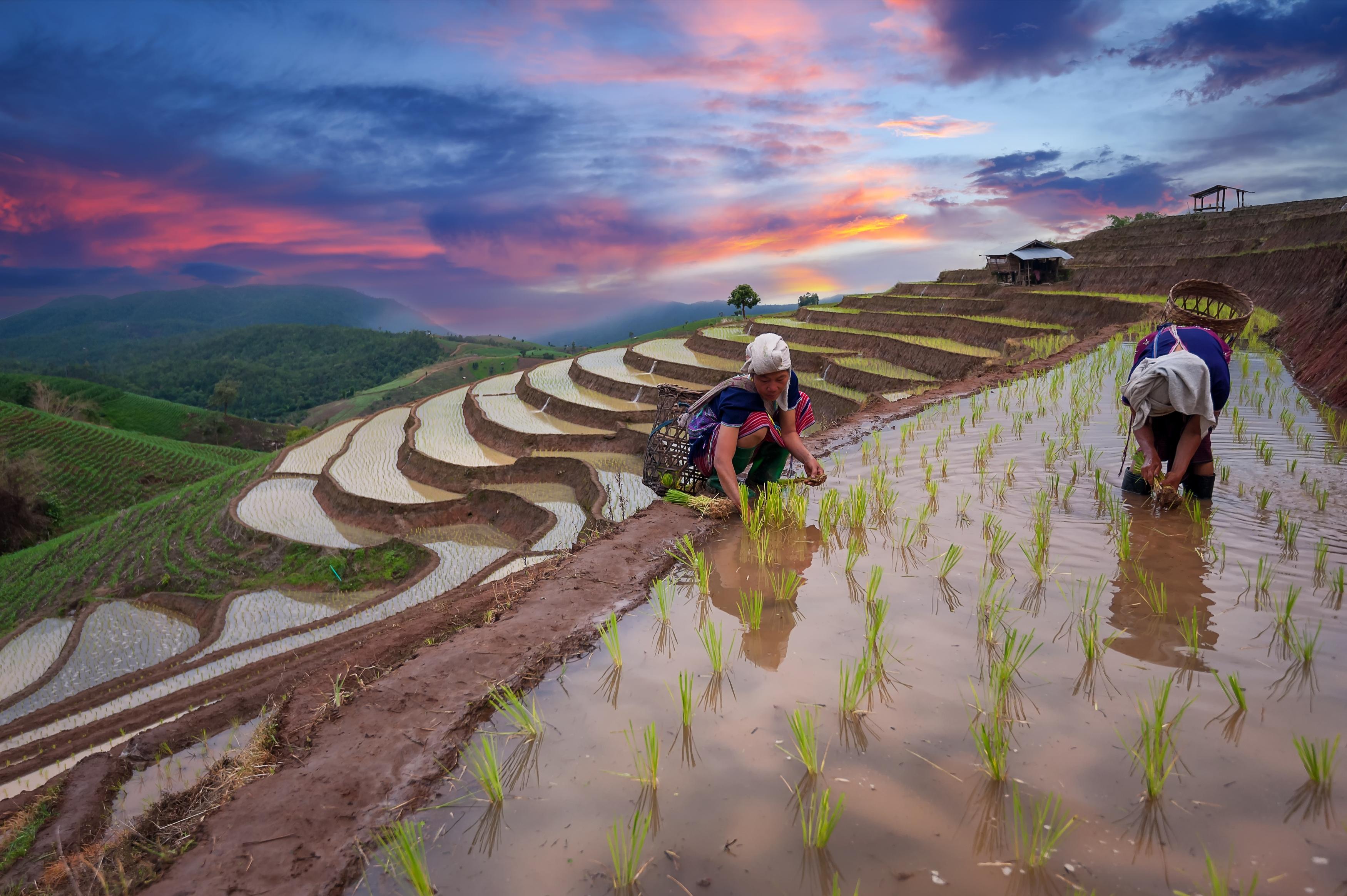 Riceterraces