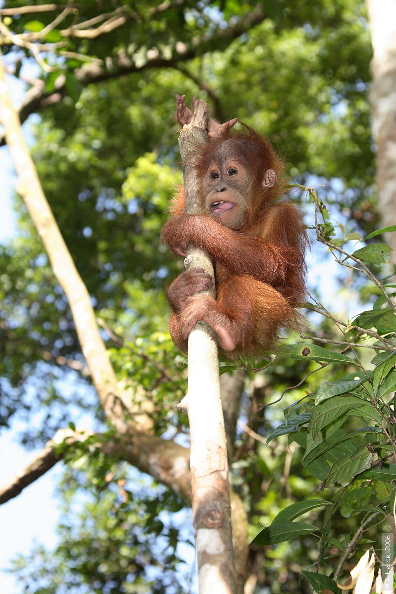 1-198  North Sumatra, NP Gunung Leuser