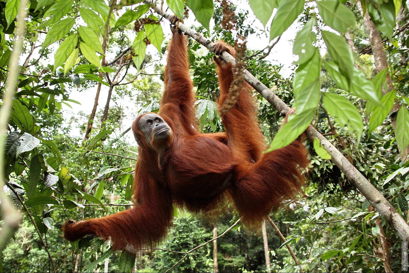 1-167  North Sumatra, NP Gunung Leuser1