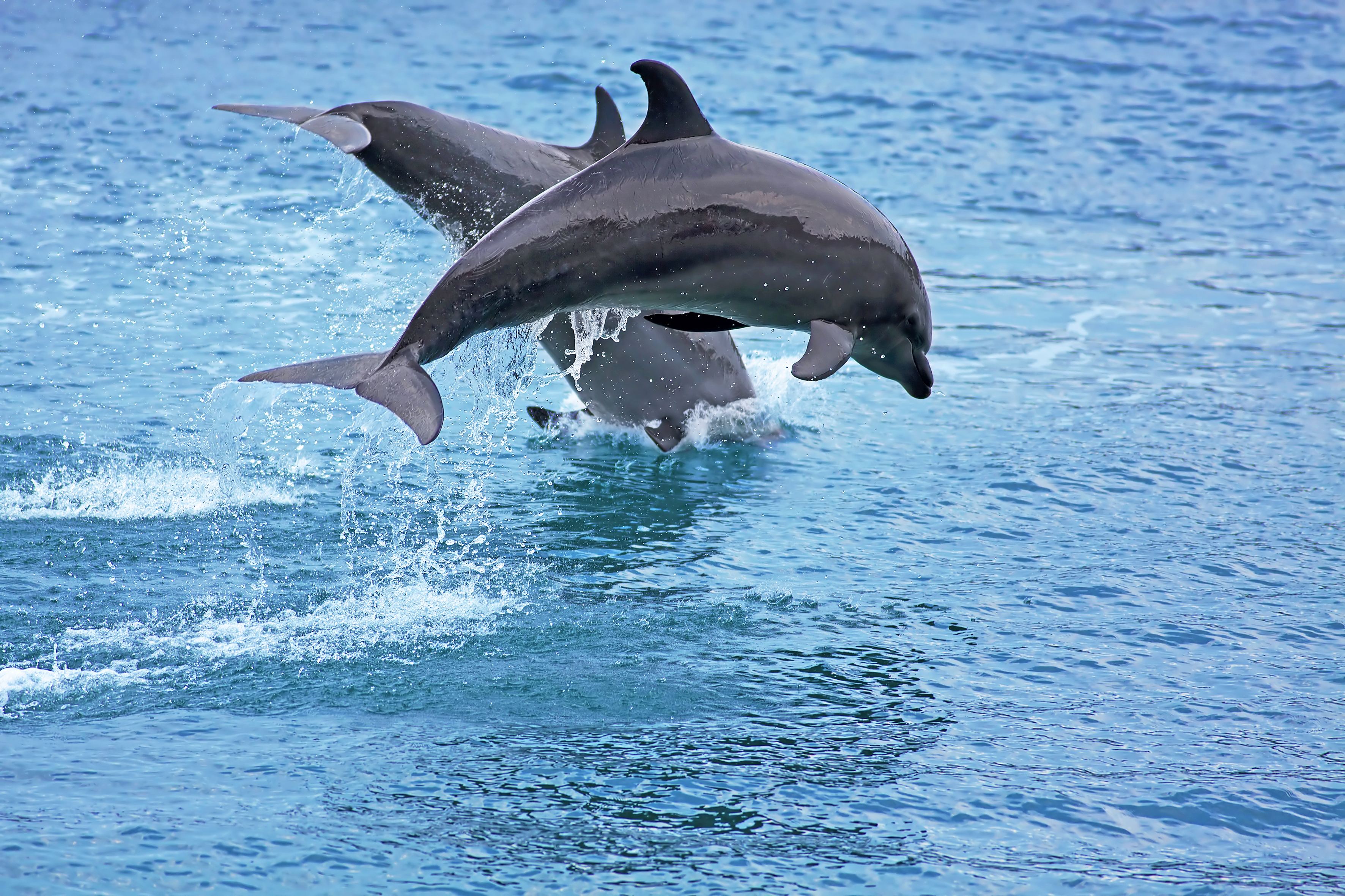 Pamilacan Island Dolphins