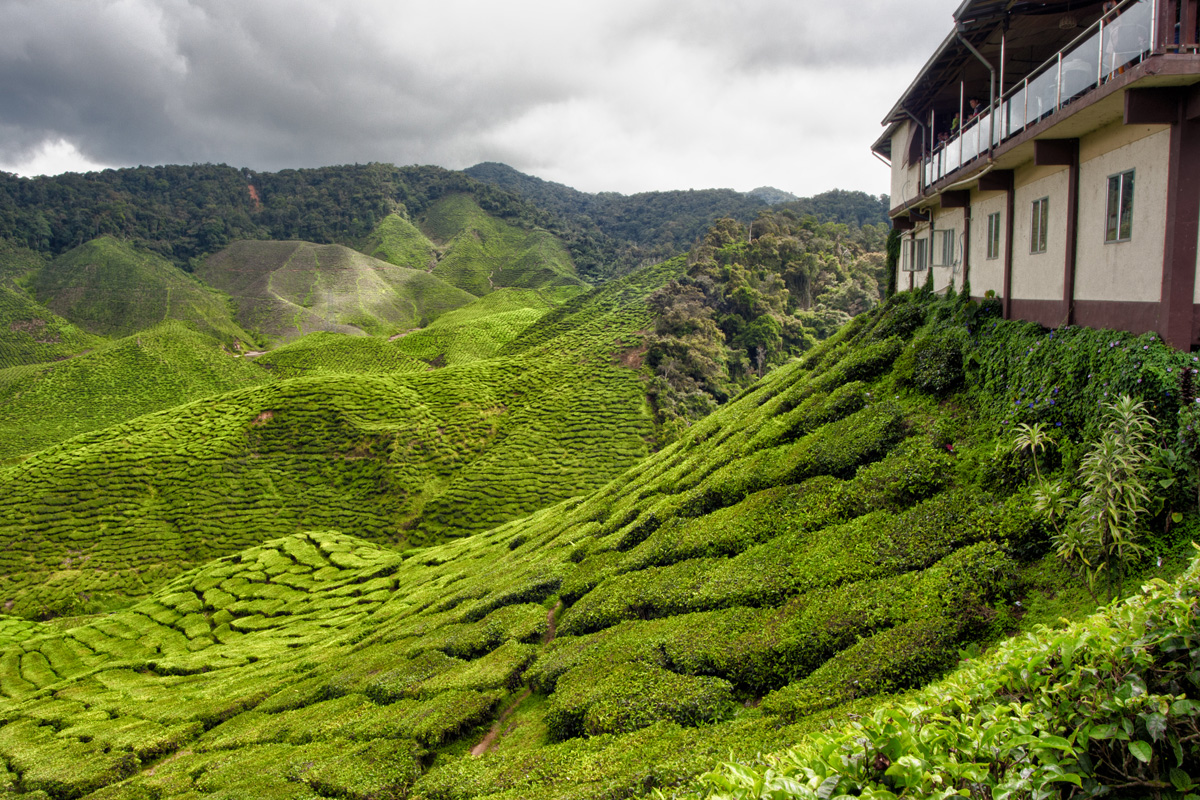 tea_house_cameron_highlands