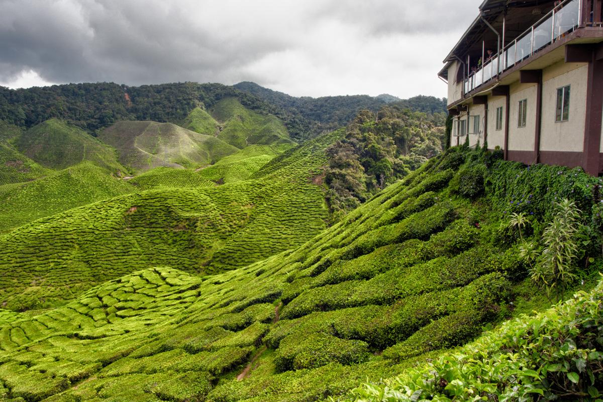 tea_house_cameron_highlands