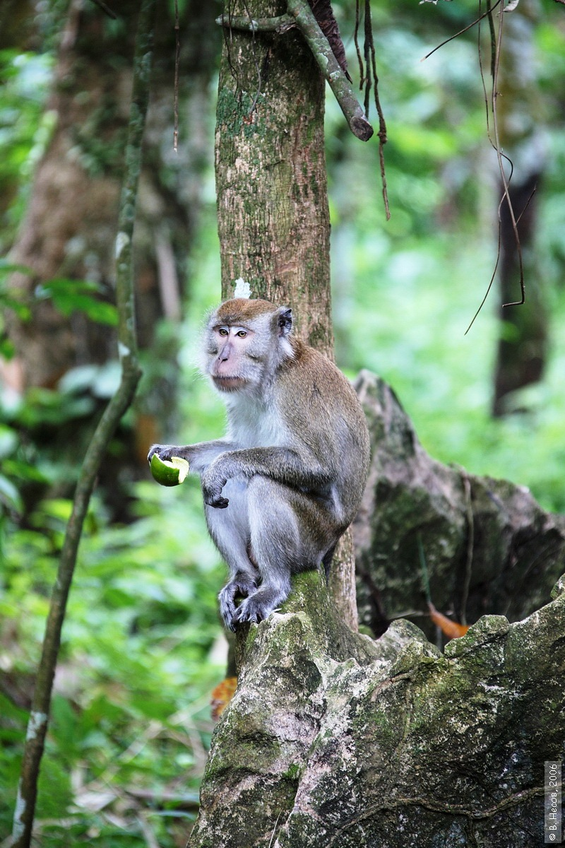 1-135  North Sumatra, NP Gunung Leuser1