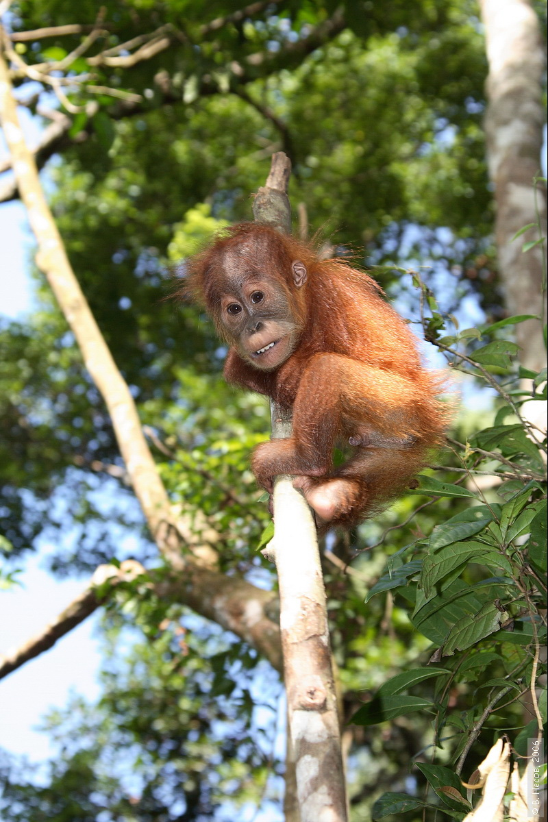 1-199  North Sumatra, NP Gunung Leuser
