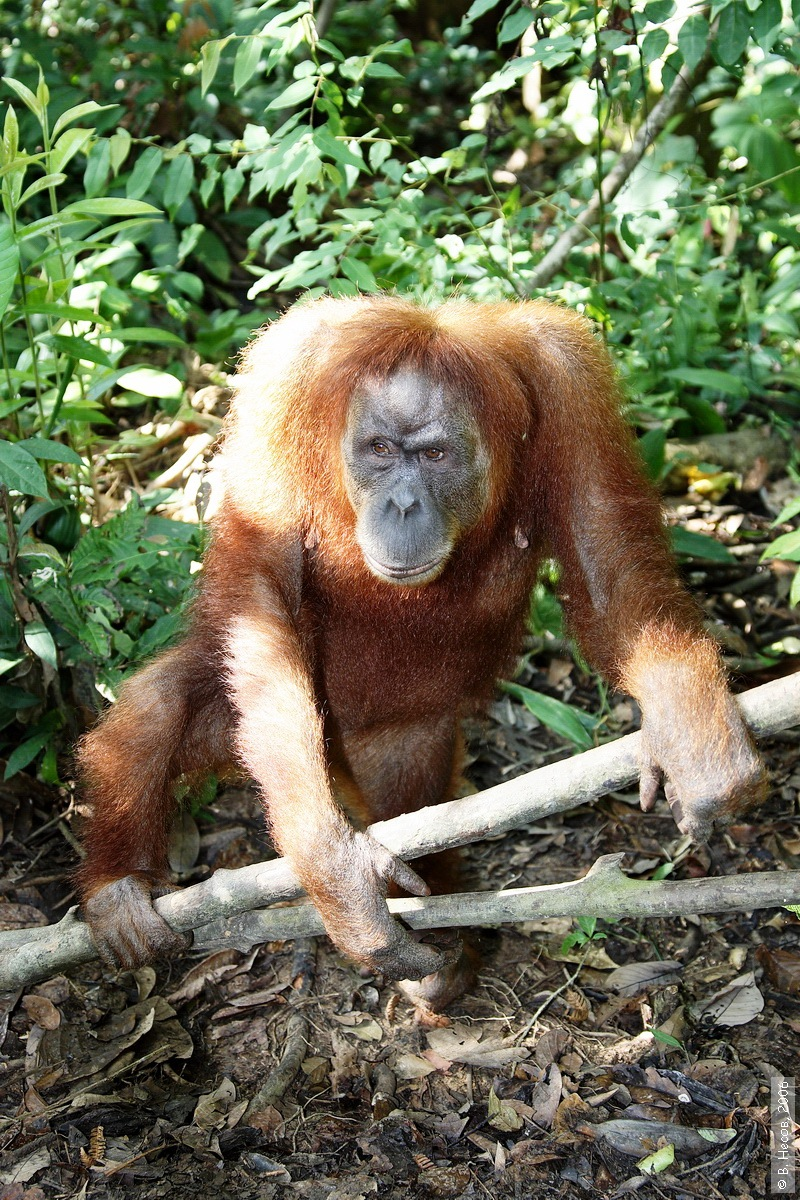 1-183  North Sumatra, NP Gunung Leuser1