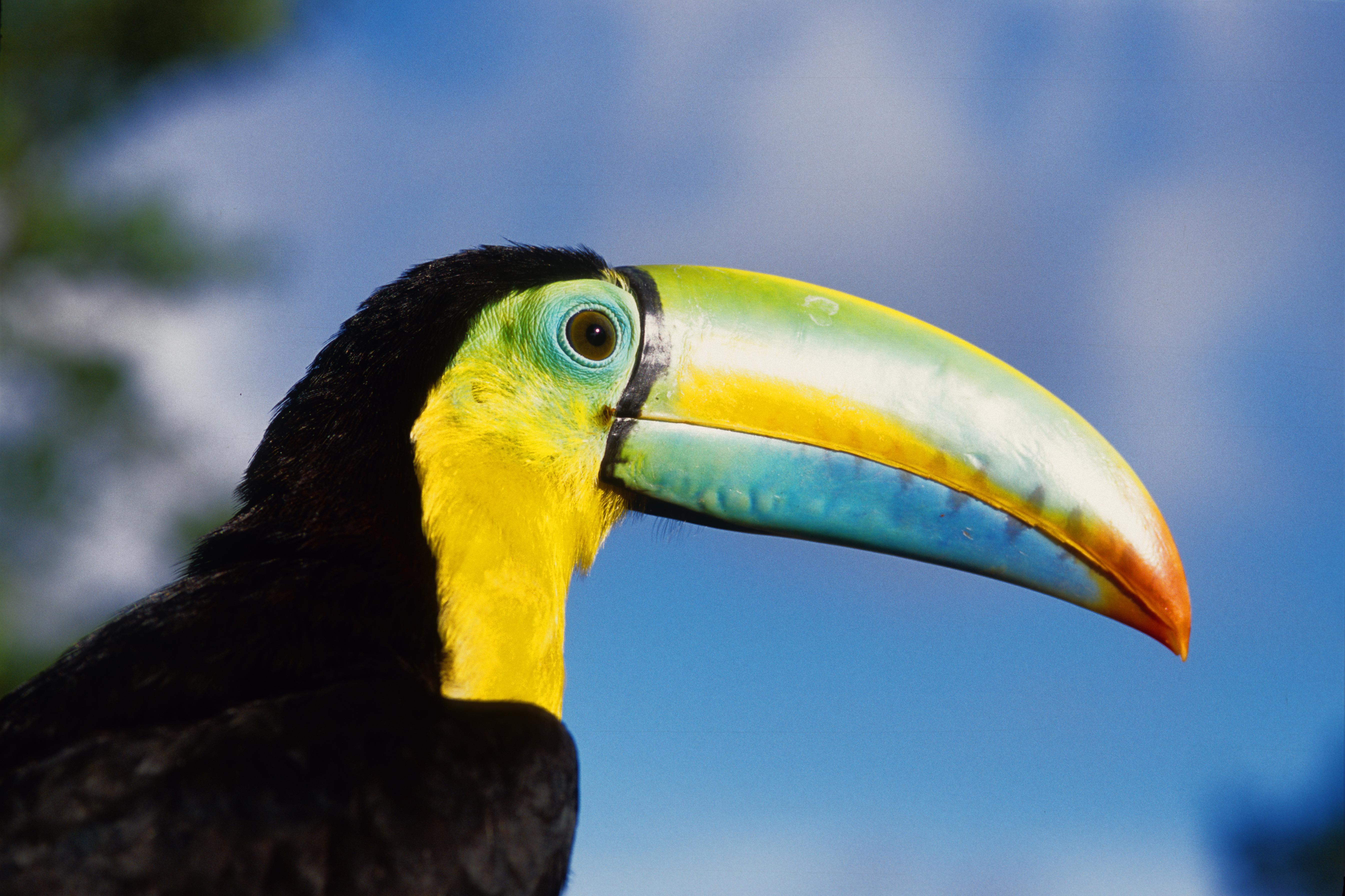 tucan-rainforest-panama