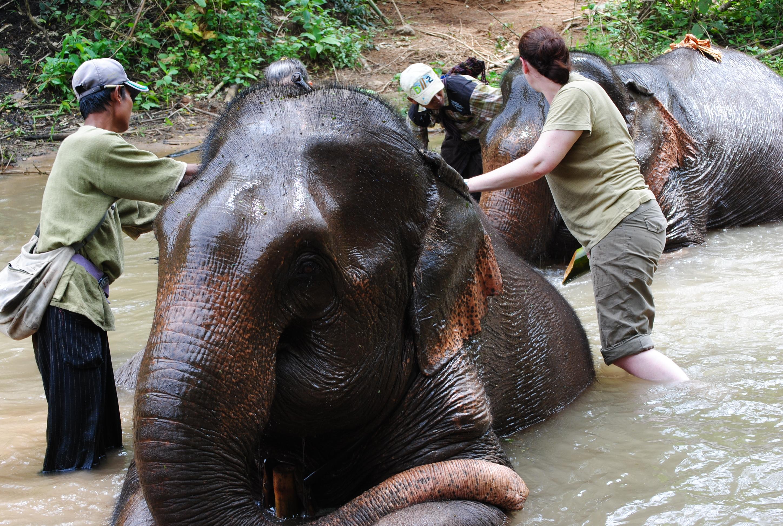 Kalaw elephant camp (499)[2]