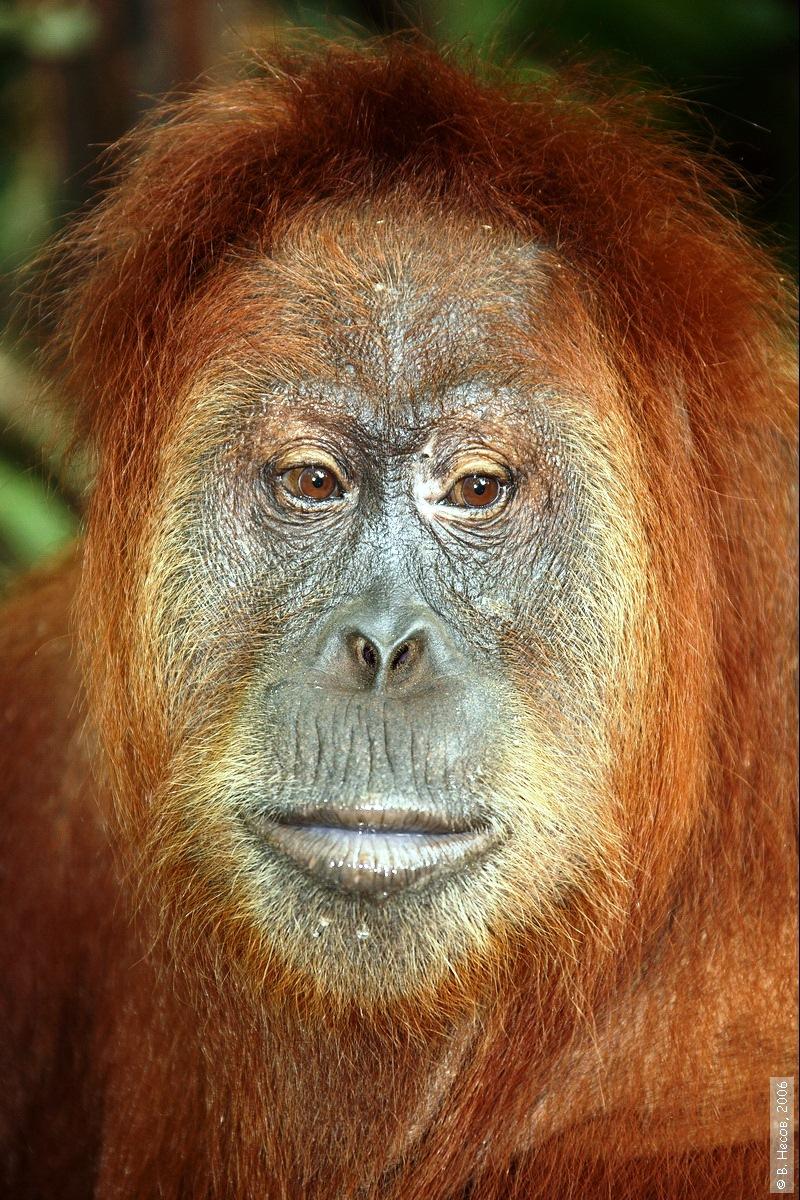 1-182  North Sumatra, NP Gunung Leuser1