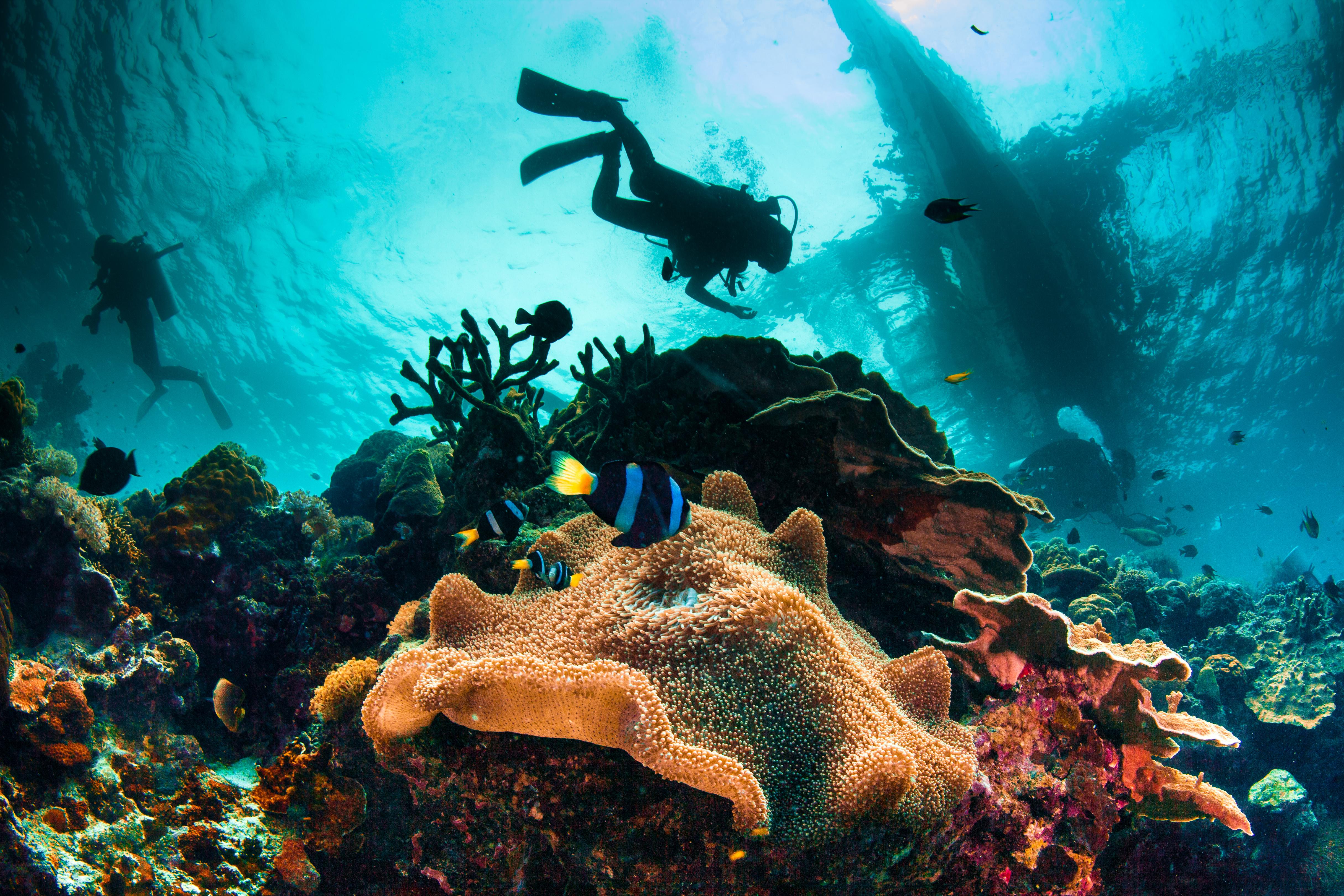 Cebu Diving