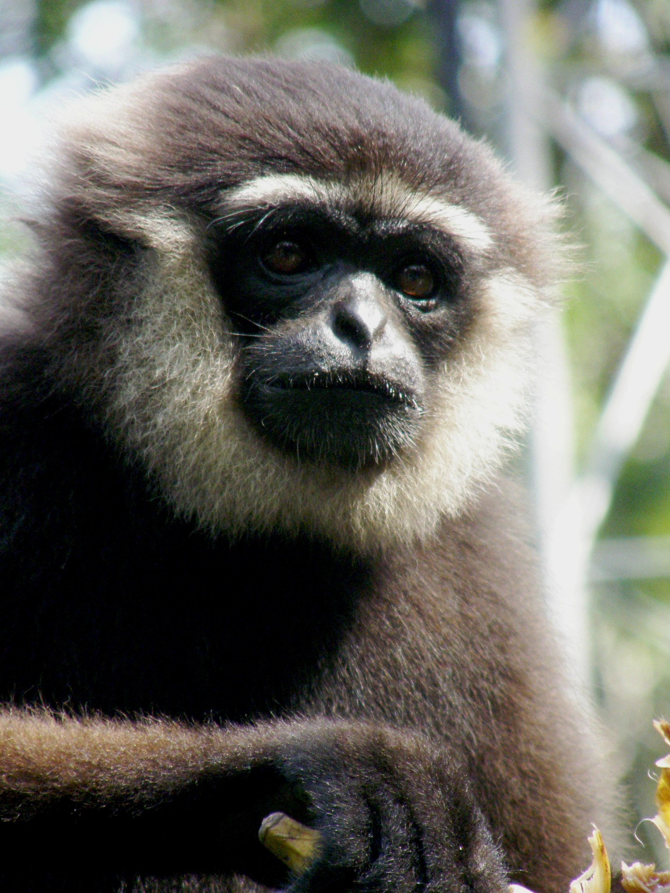 Agile gibbon3