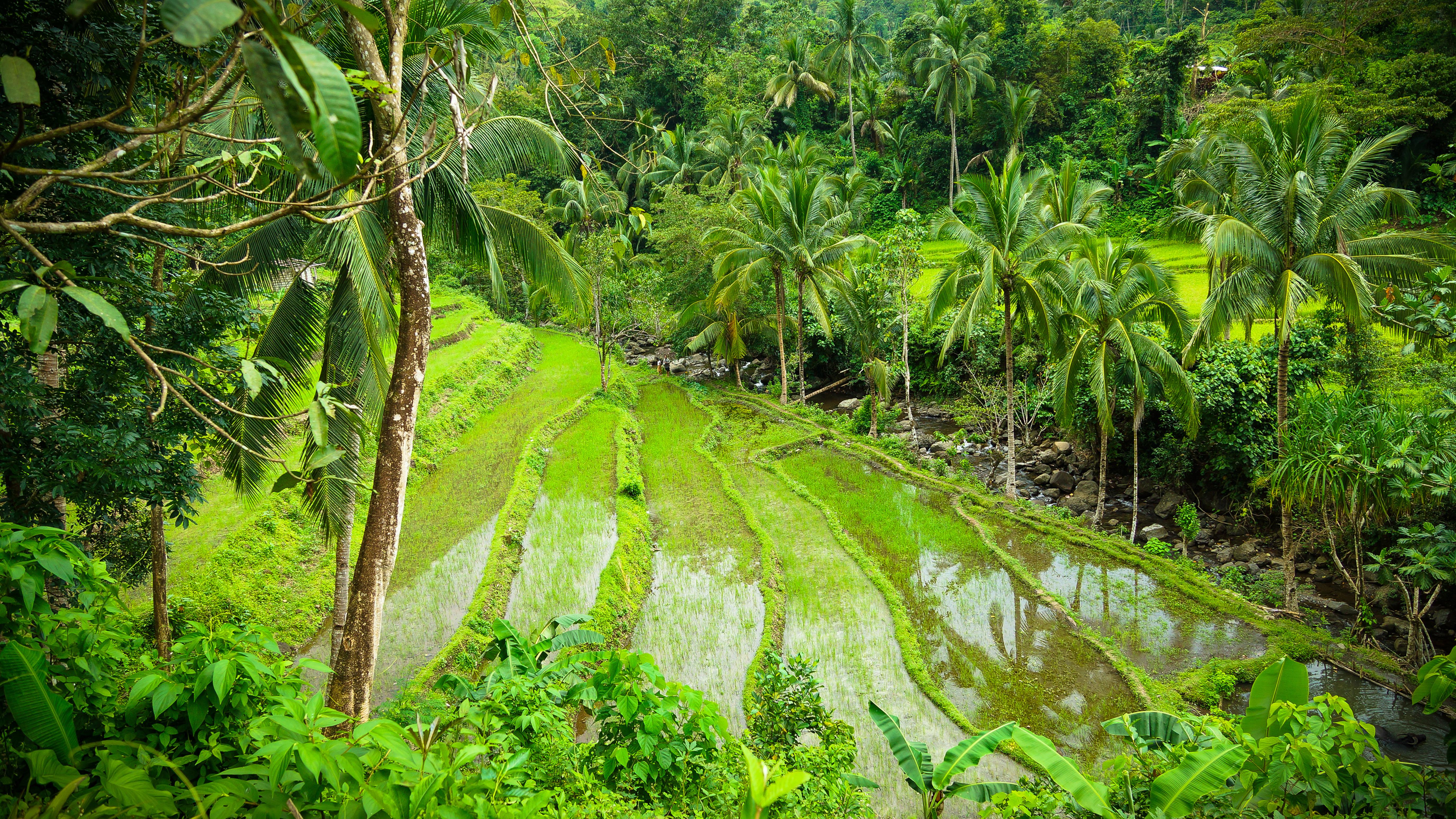 Banaue (4)